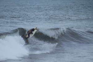surfing costa richa playa hermosa ©thefreesurfer.com