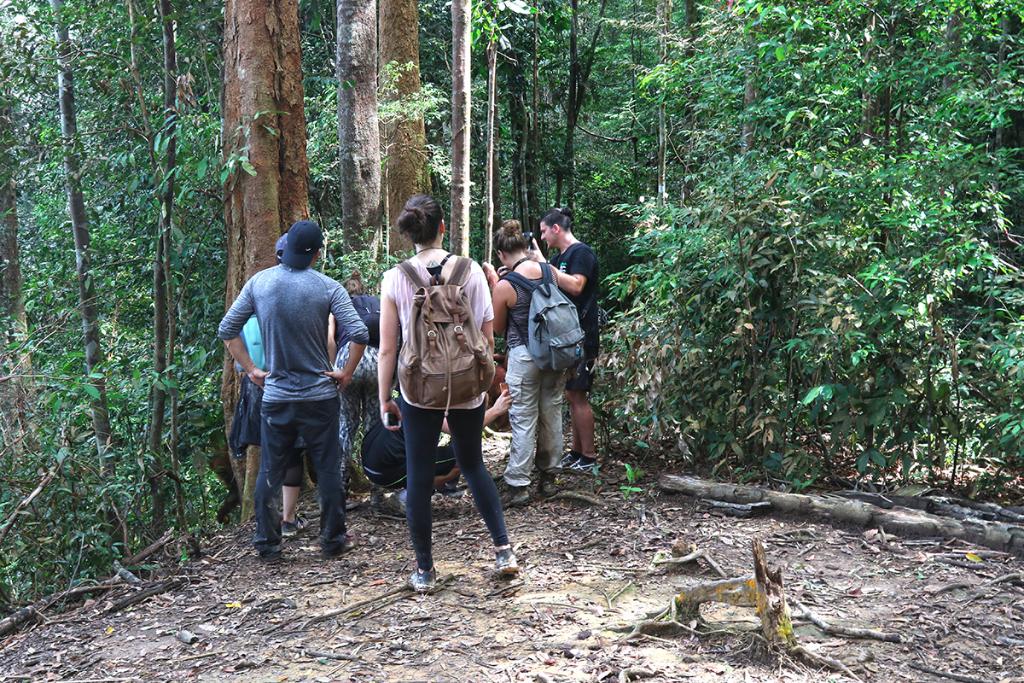 Bukit Lawang jungle trek thefreesurfer.com orangutan mina
