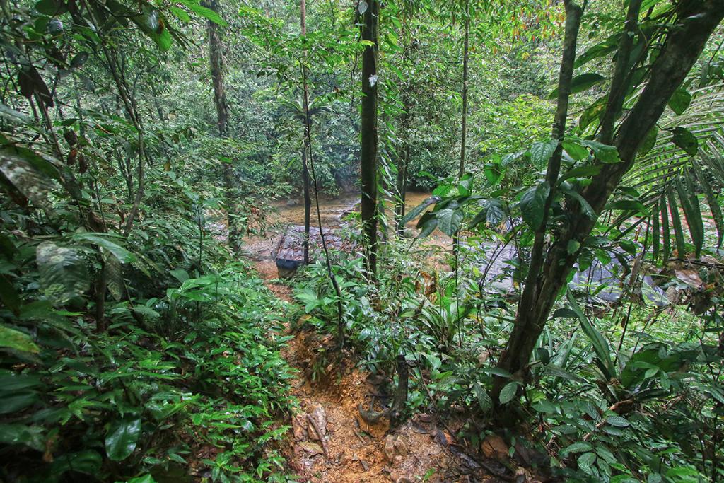 Bukit Lawang jungle trek thefreesurfer.com night camp