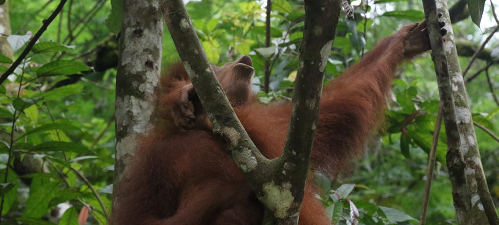 Orangutans, Jungle trek and the longest night of the year